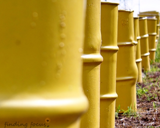 row of standing yellow barrels